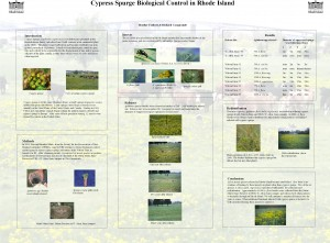 cypress spurge poster