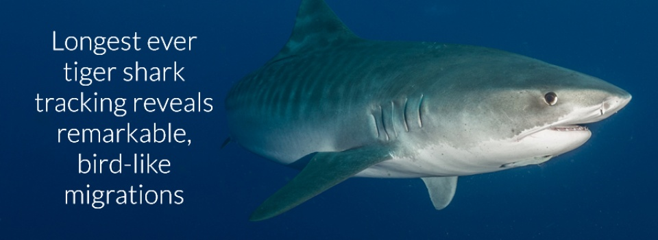 http://web.uri.edu/cels/files/CELS_Shark1_Banner-copy.jpg