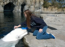 URI undergrads play key role in beluga whale research