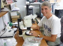 CELS Scientist Studies Emergence of Winter Moths in Rhode Island