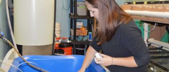 CELS undergrad studies disease defense of oyster aquaculture in SURF program