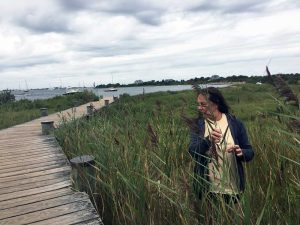URI Professor Laura Meyerson investigates Phragmites at a marsh on Block Island as part of her research. (Photo courtesy of Laura Meyerson)