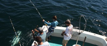 Students join shark tagging expedition to learn about shark migrations