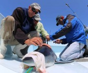 """CELS researcher uses """"shark race"""" to study movement patterns of Mako sharks"""