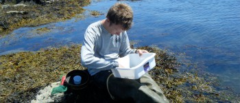 URI researcher: Invasive crabs changing ecology of Narragansett Bay