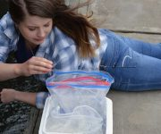 CELS undergrad investigates impacts of climate change on sea squirts