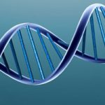 The Rhode Island Genomics and Sequencing Center (RIGSC) was established to provide technical and analytical support for molecular biology and genomics research at the University of Rhode Island and all RI EPSCoR institutions.