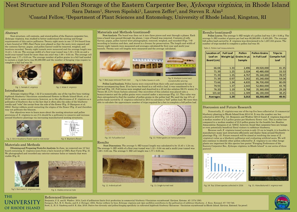 Xylocopa-Poster---Nesting-(11-7-16)