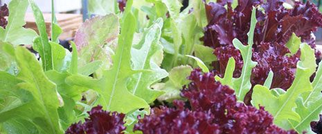 a website that provides information about home garden food safety best practices.