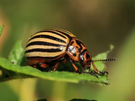 Insects, microbes, weeds, birds, and rodents are important parts of the ecosystem, but they can also cause significant problems for farmers. Integrated pest management, minimal risk pesticides, and physical barriers are important tools for protecting crops.