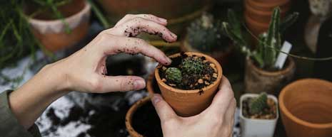 The URI Gardening and Environmental Hotline identifies plants or insects in your garden, and will provide you with horticultural information.