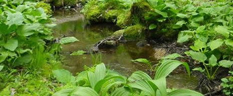 To protect and restore water quality through research and education on watershed processes.