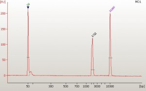 Electopherogram of a PCR product run with the DNA 7500 chip. This amplicon is 1722 bp in size and is the only product present in this sample