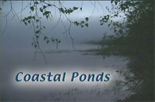 Coastal Ponds Video