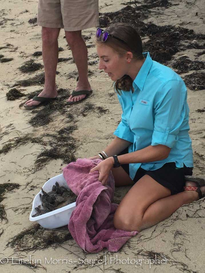 Hilary releasing green turtle hatchings in the East End Marine Park with Friends of STXEEMP volunteers, 2016.