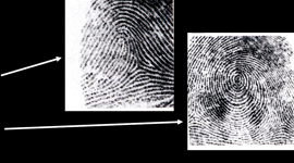 two fingerprint images