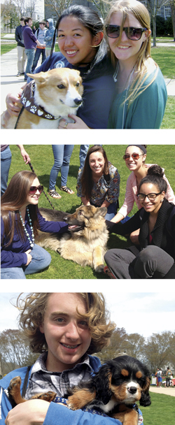 The Student Senate Cultural Committee brought five therapy dogs, one dog in training, and two puppies to the Quad for last year's inaugural Rhody Paws. Corgis, Labs, Cavalier King Charles Spaniels, and more are expected this year.