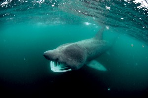 Taking a Bite Out of Sharks' Bad Reputation – quadangles ...