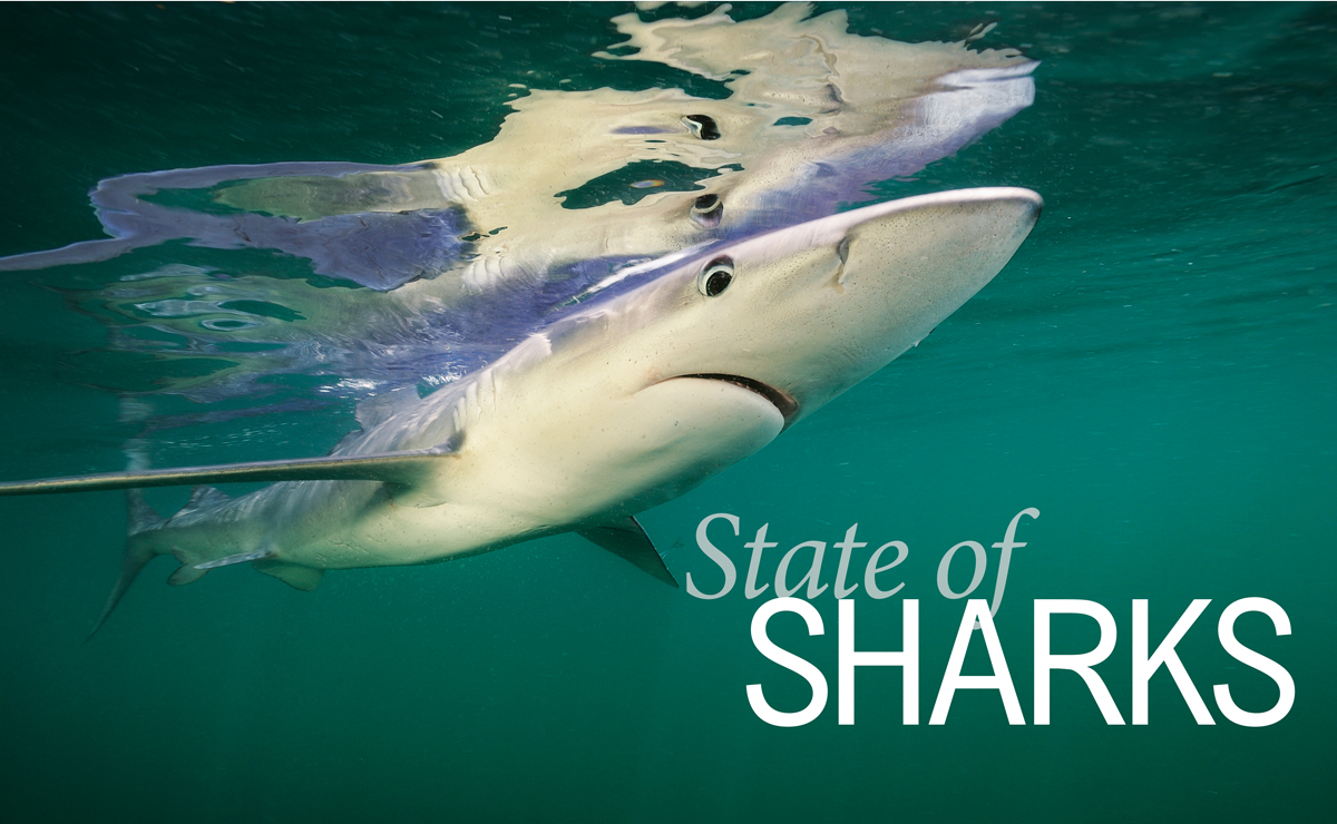 State of Sharks