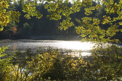 view of the lake through the trees